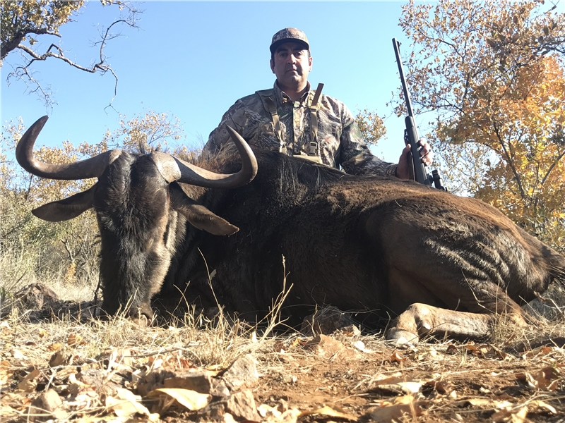 Blue Wildebeest Hunt