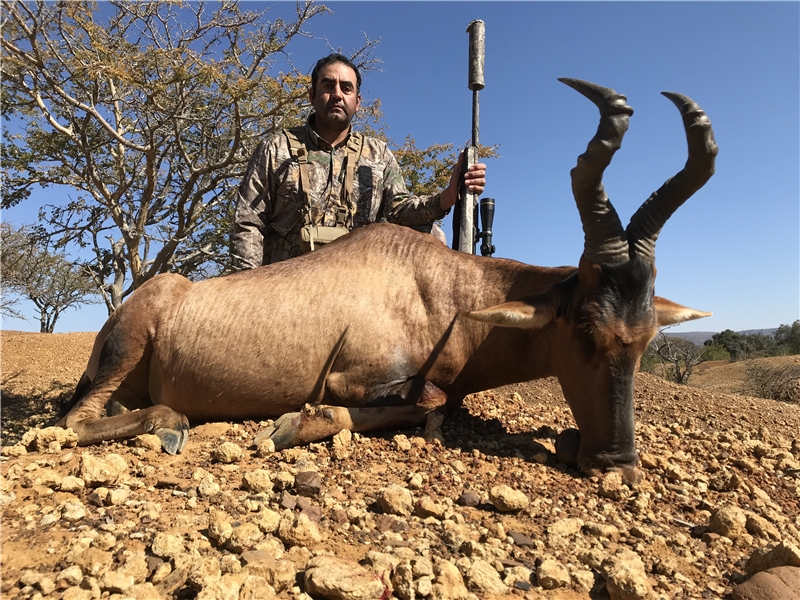 Red Hartebeest Hunt