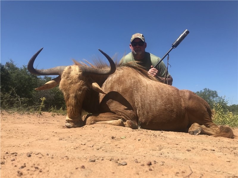 Golden Wildebeest Hunt